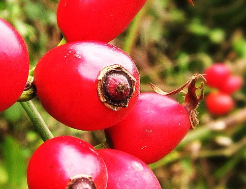 El fruto del cual se extrae el aceite