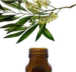 aceite arbol de te con propiedades antifungicas y antimicrobianas